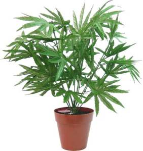Fake Marijuana Plant--only 1200 yen (10 buck)