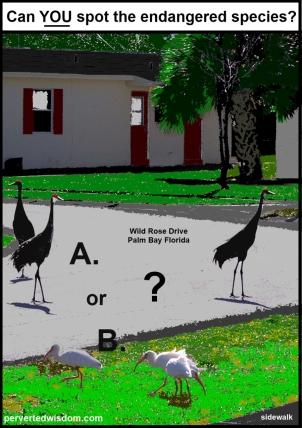 Sandhill Cranes and Ibis Palm Bay FL